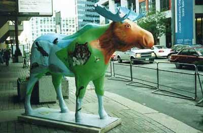 http://www.wherearethemoose.com/img/moose/algonquin-moose.jpg